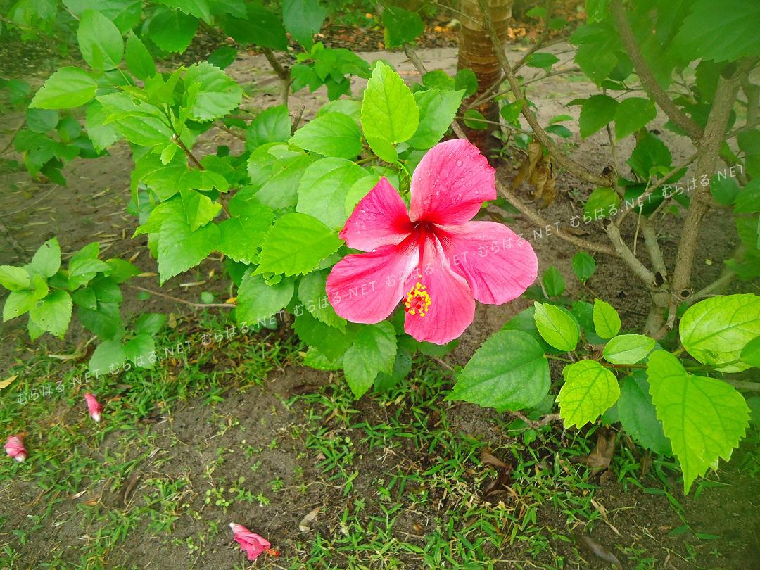 島にあったお花
